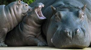 Animal Moms Who Have Had Enough of their Children