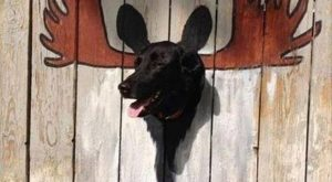 funny caption moose painted on fence neighbors dog keeps sticking head thorugh