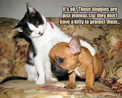 View All – Funny Animal Pictures With Captions – Very Funny Cats – Cute…