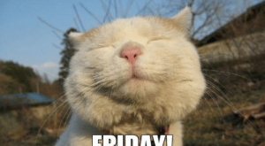 "#tigf ""> #tigf #happyfriday ""> #happyfriday"