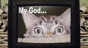 LOL Funny Caption Cat Framed Decor Photo Print Make Them Laugh Free Gift |…