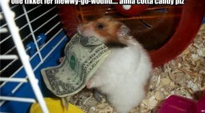 Guinea Pigs with Funny Captions
