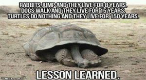 16 Funny Turtle Memes That Will Make You LOL