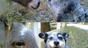 funny caption dog licks donkey tastes like ass