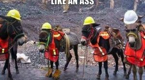 funny caption donkey wearing gloves on feet you look like an ass