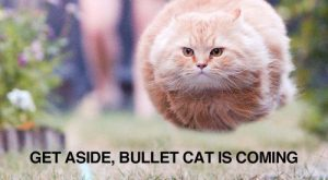 Cats with funny Captions 01