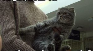 Cats with funny Captions 03