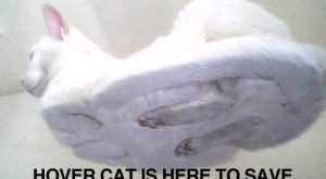Cats with funny Captions 04