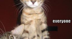 Cats with funny Captions 05