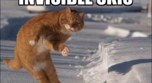 Cats with funny Captions 08