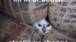 Cats with funny Captions 09