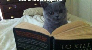 Cats with funny Captions 12