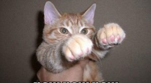 Cats with funny Captions 14