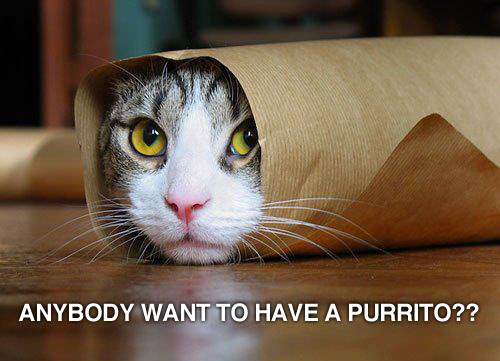 Cats with funny Captions 15