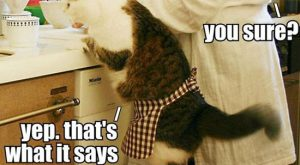 Cats with funny Captions 23