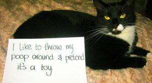 LOL Very Funny Cat Shaming