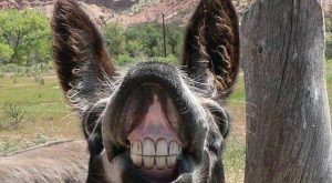 Funny Donkey Captions