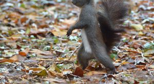 Funny Squirrel quotes with Caption