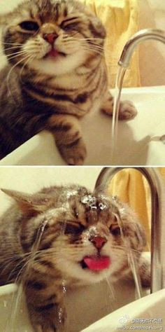 Funny and nice Animals_001