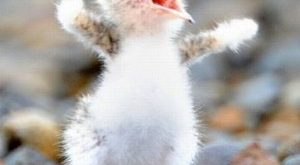 Funny and nice Animals_028