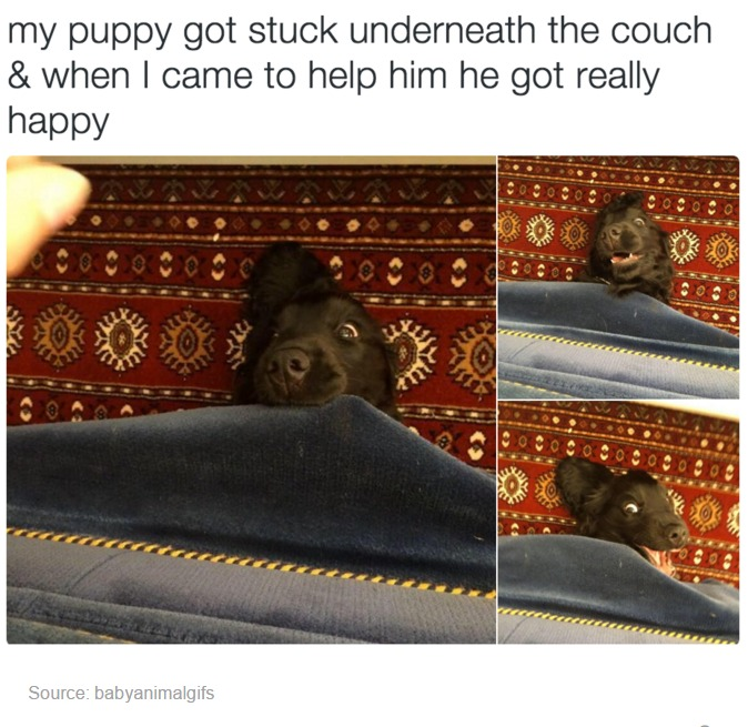 Funny and nice Animals_031