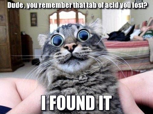 Image of: Kittens Hilarious Cat Pics For You 002 Dumpaday Hilarious Cat Pics For You 002 Fit For Fun