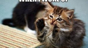 Hilarious Cat Pics for You 008