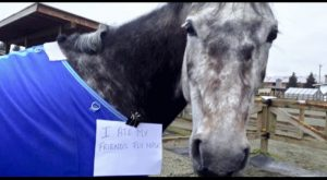 Horse Shaming at its Best 007