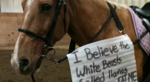 Horse Shaming ❤😂😁🐴🦄 at its Best 010
