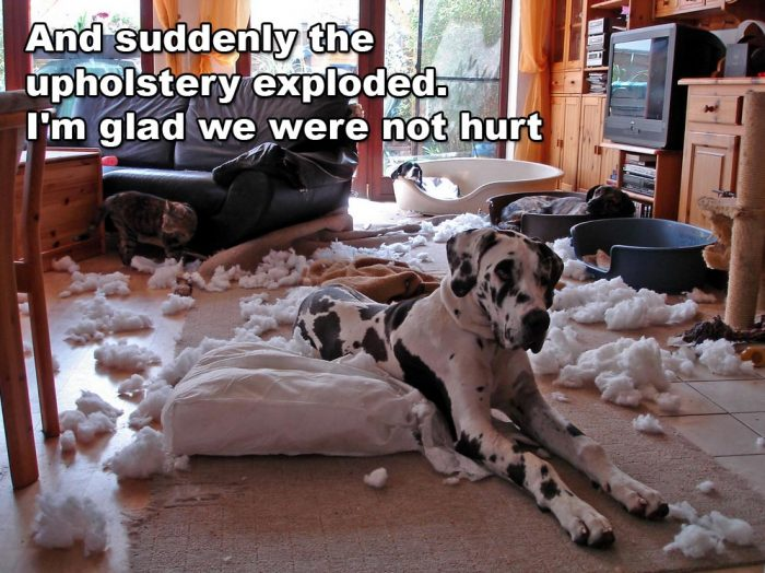 couch_exploded