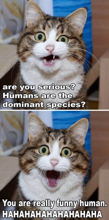 human_are_dominant