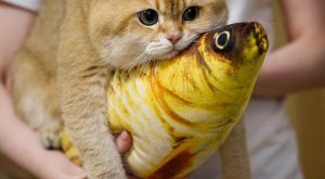 nice cat pictures 028