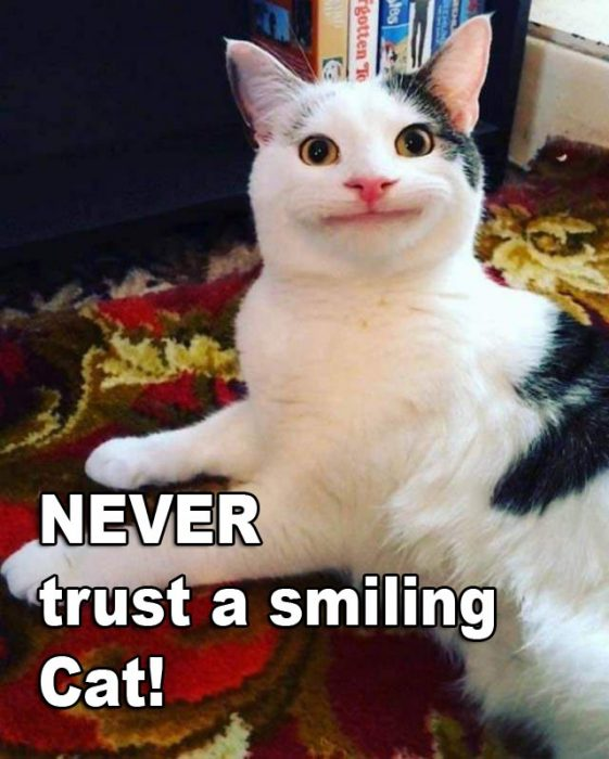 Never trust a smiling Cat 