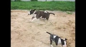 Dog Goes Berserk in Sand Box