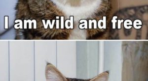 wild_and_free
