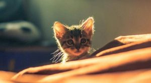 TOP 48 Funny Cats and Kittens Pictures | Funny Animals, Funny Cat |