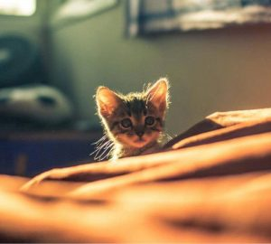 Funny Cats and Kittens Picture