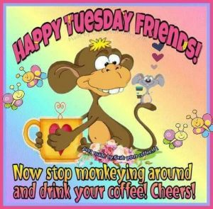 Stop monkeying around and drink your coffee! Cheers! Happy Tuesday tuesday tuesday quotes tuesday…