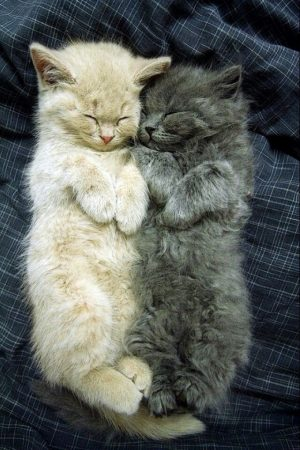Lovely Cute Cats Picture