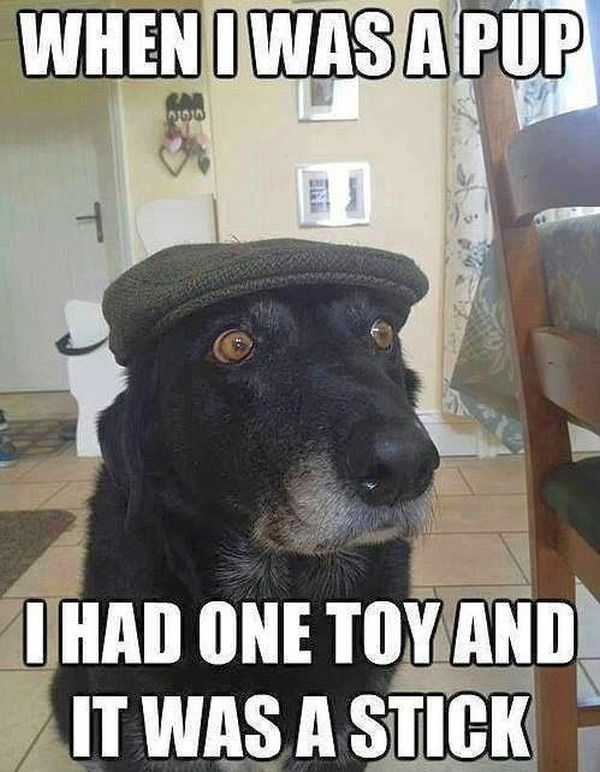 Dog Memes With Caption That Will Make You LOL