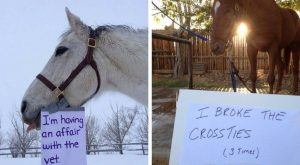 Horse Shaming Photo That Will Make You Say 'Naughty, Naughty'