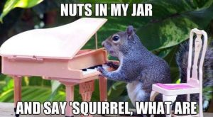 Funny Animal Picture Of The Day