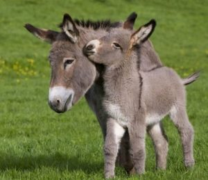 Cute and Funny Donkeys