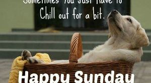 Funny Sunday Quotes 138