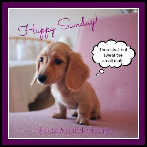 Funny Sunday Quotes 174 Fit For Fun
