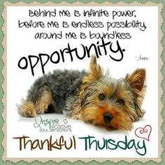 Happy and Funny Thursday Quotes – Fit for Fun