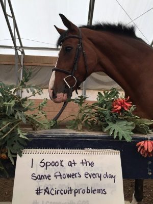 Horse Shaming at its Best 006