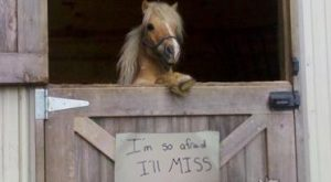 Horse Shaming at its Best 020