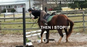 Horse Shaming at its Best 023