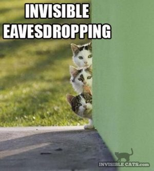 Only Cats can see that…